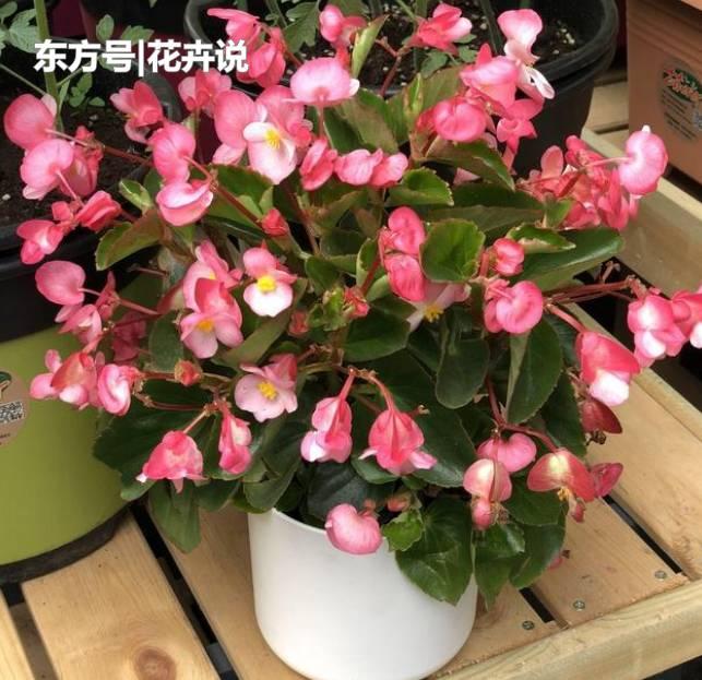 這5種花草可全年開花,關鍵還好養!