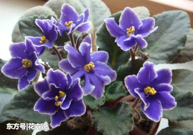 5種耐陰的室內開花植物,給點散射光就能花開不斷!