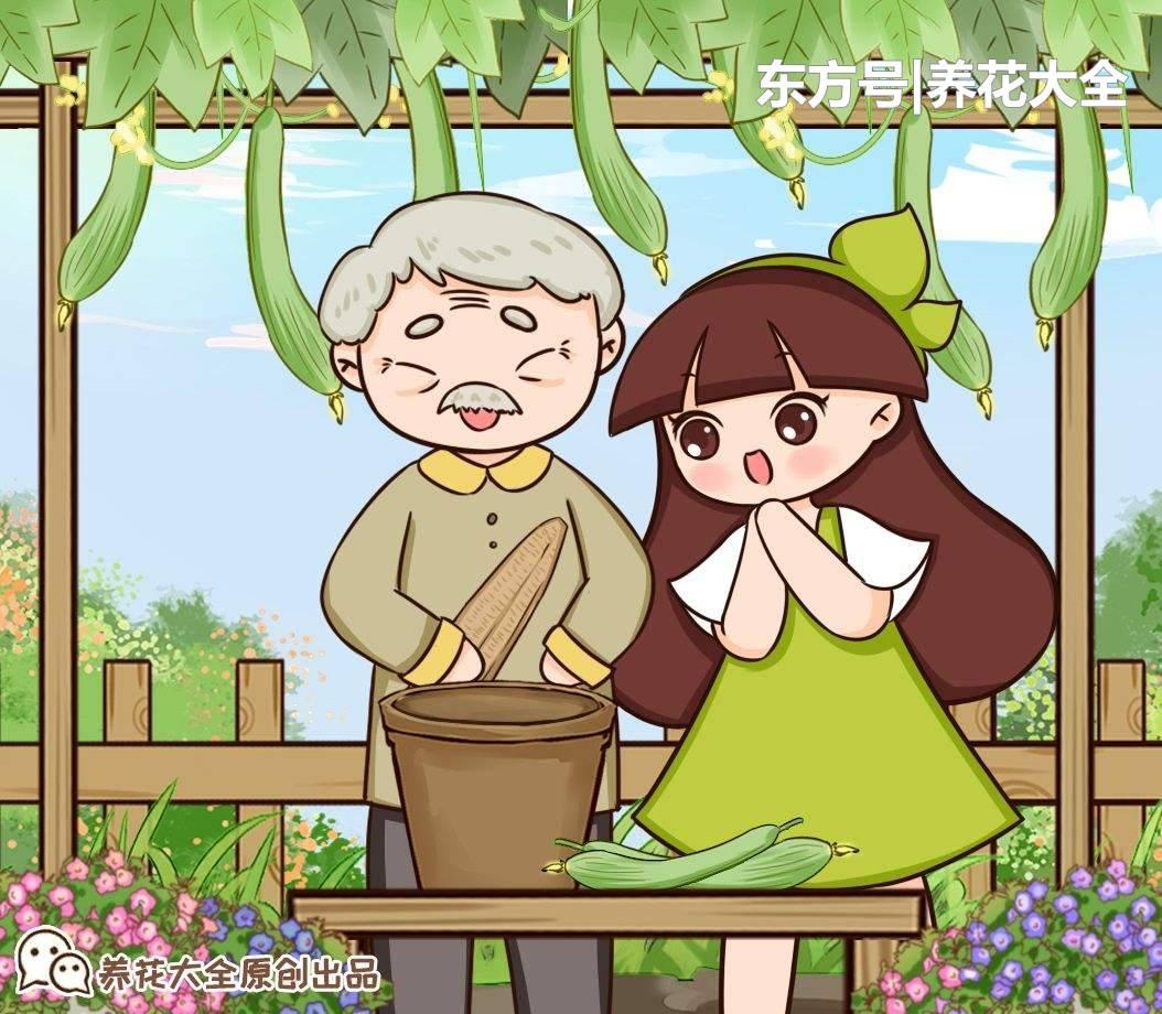 家里種盆絲瓜,簡單處理一下,養花有奇效!