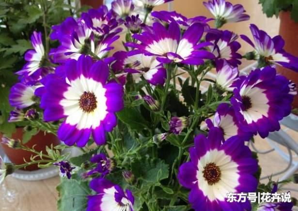 春天播種這3種花卉,種子埋土里就能活!