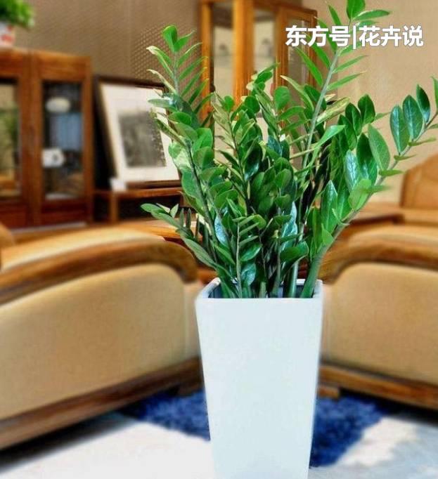 這3種花卉,掐片葉子丟土里,自己生根發芽!